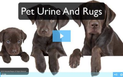 Protect Your Rugs From Pet Urine Damage