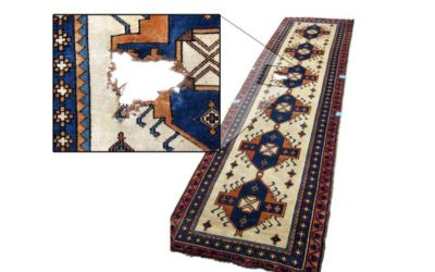 House plant damage to rugs. Your options.