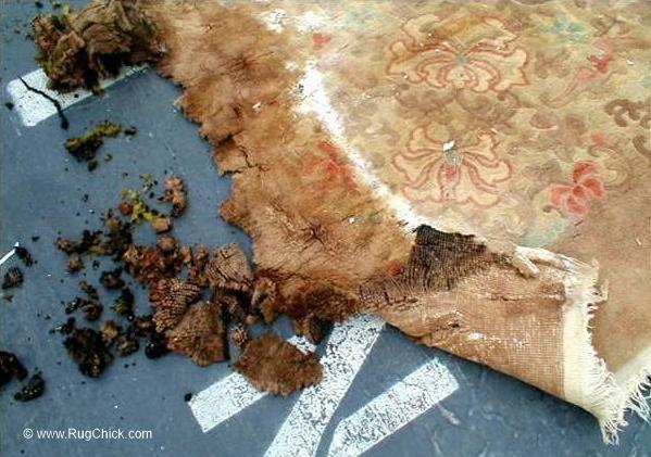 Rug murder from mildew