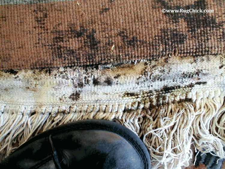 Mildew damage more visible on back side of rug near planter