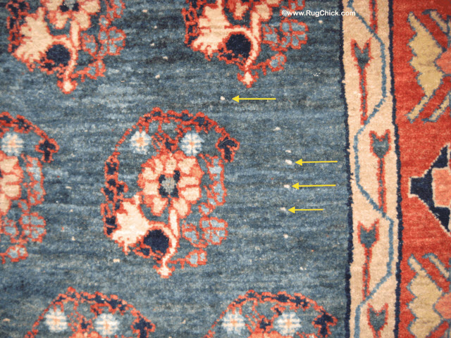White knots visible in the field of this hand woven rug after a really good bath.